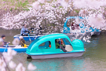 Tokyo; Japan - March 28; 2019: People are riding the Paddle boat in Chidorigafuchi Canal for viewing Cherry Blossom.