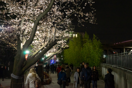 Tokyo; Japan - March 28; 2019: People are viewing the Cherry Blossom along Sumida river bank. Editorial