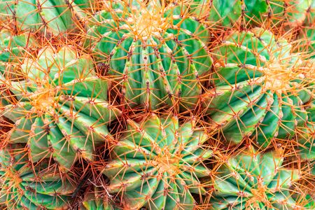 Green Cactus with red thorn top view on rock garden Stock Photo