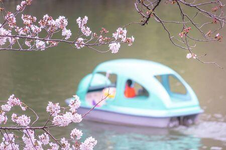 Family is riding on paddle boat in Tokyo Chidorigafuchi Sakura park