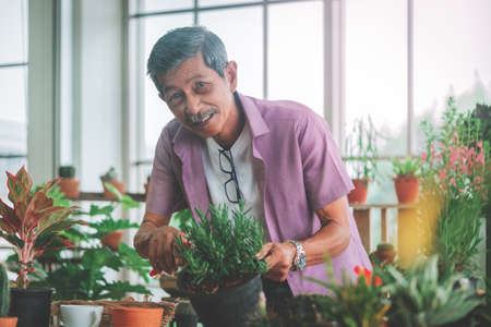 Happy Senior Asian retired man is cutting plant inside his home for welness hobby lifestyle.