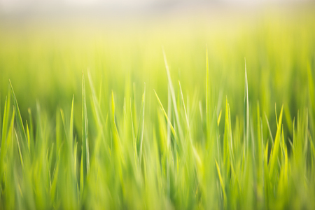 Abstract natural background of green grass and sun flare background. Soft focus. Stock Photo