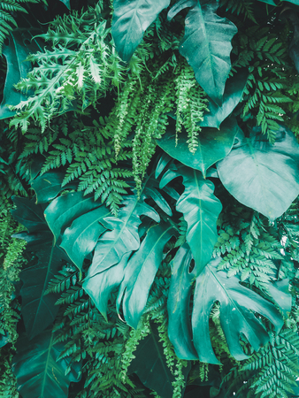 tropical green leaves background. nature spring concept, green leaf texture background. Stock Photo