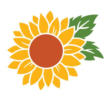 Yellow sunflower with green leaves vector illustration.