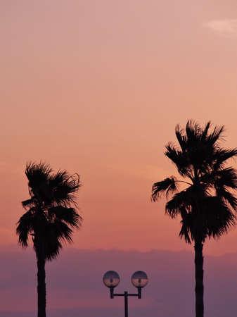 enoshima: Palm trees at sunset