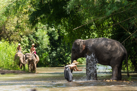 spacial: CHIANG MAI; THAILAND - August. 24: Daily elephant show at The Thai Elephant Conservation Center; mahout show bathe an elephant; August 24; 2014 in Chiang Mai; Thailand.
