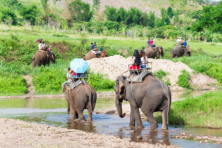 elefantes: Turistas en grupo para montar en un elefante en el bosque en Chiang Mai, Tailandia Foto de archivo
