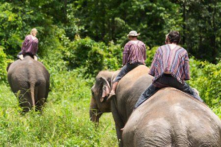 Tourist ride asian elephants trekking through jungle in northern Chiang Mai, Thailand.