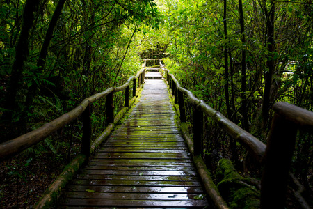 evergreen forest: wood bridge for a walk on evergreen forest Located on altitude Stock Photo
