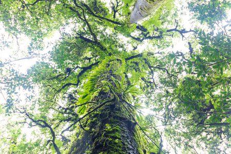 evergreen forest: plants in tropical evergreen forest located on high altitude above sea level.
