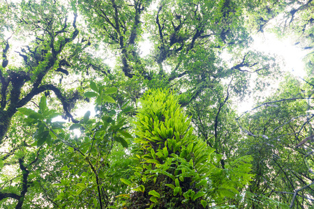 tropical evergreen forest: plants in tropical evergreen forest located on high altitude above sea level.