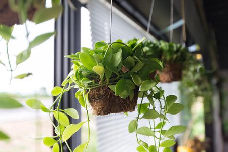 APARTMENT LIVING: Flowerpots hanging on window sill