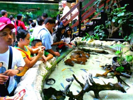 aqua: Tourists and spectators at the manila ocean park watch fish attractions