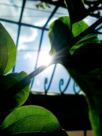 pocket: Green leaves and the sun Stock Photo