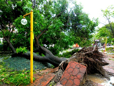 Aftermath of typhoon glenda rammasum-international name in philippines last july 16, 2014