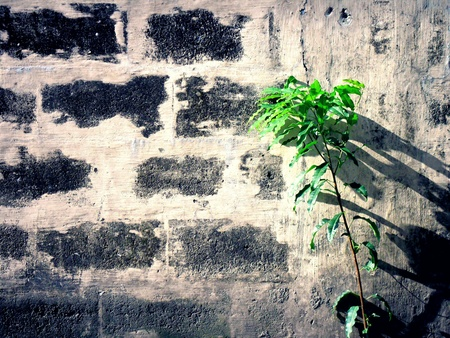 perimeter: Concrete wall and a tree plant