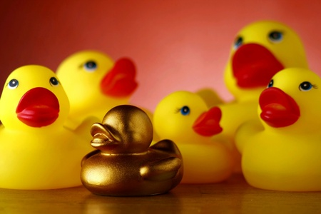 gold: Rubber duckies and a golden duckling
