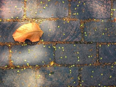 dried leaf: Dried leaf on brick road