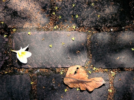 brick road: Dried leaf and flower on brick road