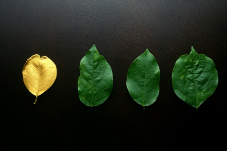 gold: Golden leaf and green leaves on a wooden table