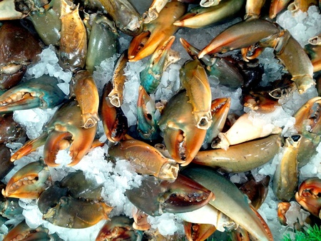 pincers: Crab claws or crab pincers sold at a grocery