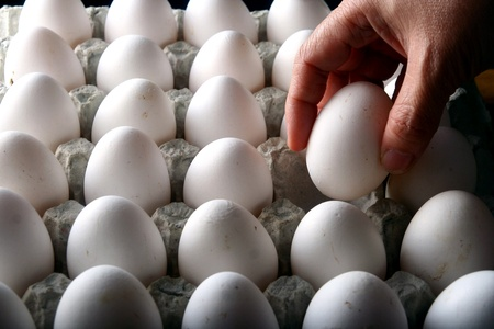 Hand picking an egg from an egg carton or egg tray