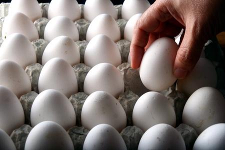 huevo blanco: Mano que toma un óvulo de un cartón de huevos o la bandeja de huevos Foto de archivo