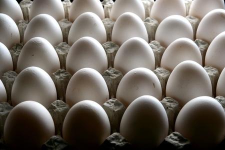 huevo blanco: Cart�n o bandeja de huevos frescos