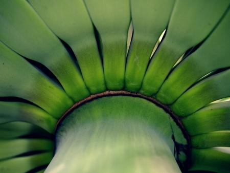close: Close up shot of green banana