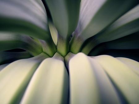 up: Close up shot of green banana