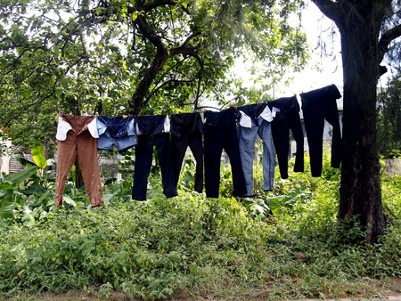 long pants: Washed Long pants hung on a tree Stock Photo