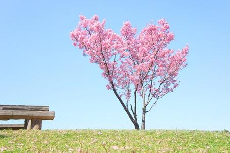 Japanische Blume Sakura