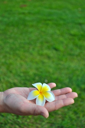 flower in hand photo