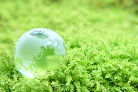 the natural world: globe
