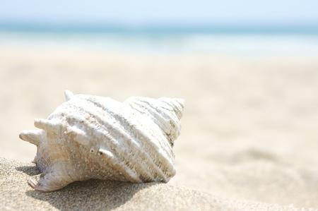 Shell am Strand Lizenzfreie Bilder