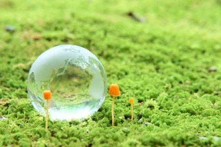moss and globe photo