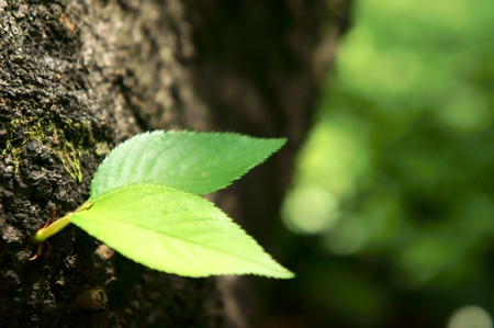 verdant sprout growing on bark tree photo