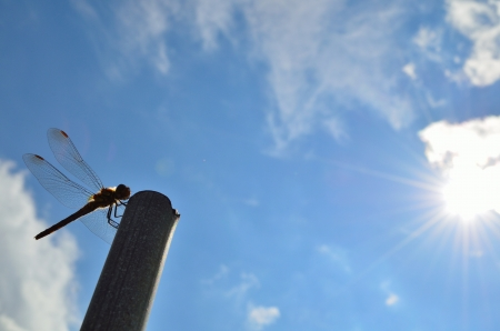 Dragonfly in sky photo