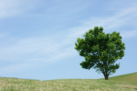 Summer landscape with tree photo