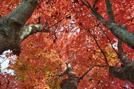 Autumnal leaves photo