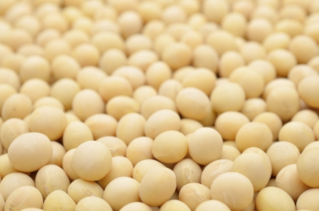 soybean isolated on black background
