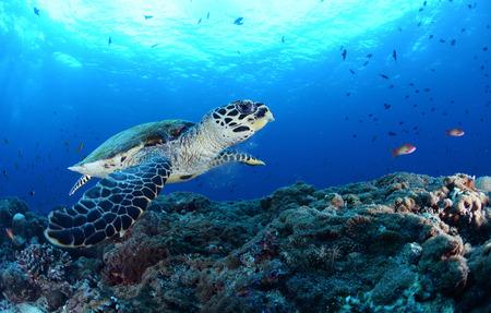 カメは、サンゴを食べていた。私は彼に閉じている場合でも
