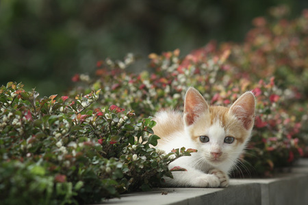 catnip: Cat looking and appeared from behind the plant
