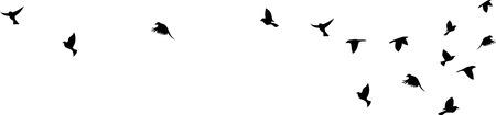 Vuelo del pájaro silueta sobre un fondo blanco