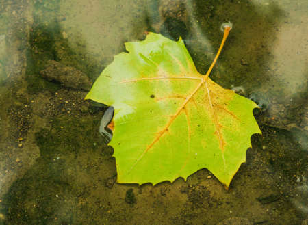 quietness: leaf Stock Photo
