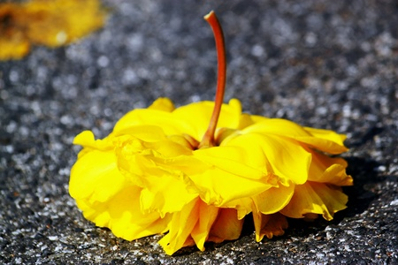 bright: Bright yellow flower fall on the road.