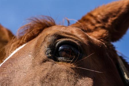 The horses eyes - Horse portrait