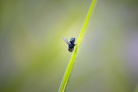 Macro pictures of flies And natural background