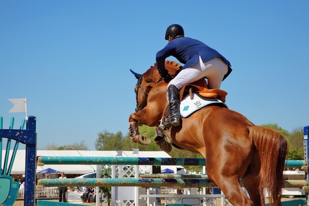 horse jumping: Looking for the next barrier