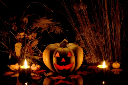 Halloween pumpkin and dry plants on black background. Stock Photo